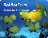 Red Sea Tours